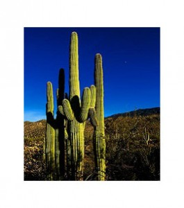 paley-cactus-canvas