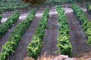 Wine on the Vine Wine Tasting @ Tucson JCC